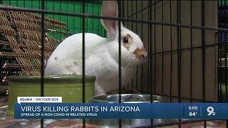 Virus killing rabbits in Arizona