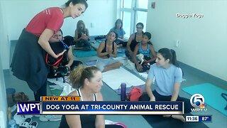 Dog yoga at Tri-County Animal Rescue in Boca Raton