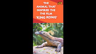 What Do You Know About Komodo Dragons?