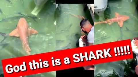 God this is a SHARK !!!!!