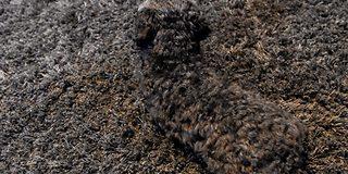 «Usynlig hund»: Ser du den?