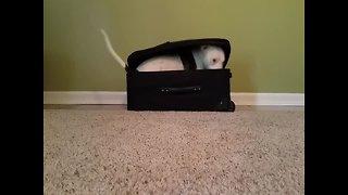 Cute Dog Plays Hide-and-Seek