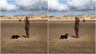Cane confuso vuole giocare con la statua!