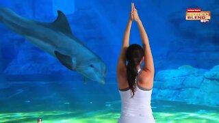 Clearwater Marine Aquarium | Morning Blend