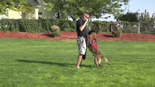 Service dog helps disabled law enforcement retiree after suicide scare
