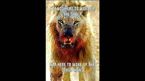 Time for the LIONS to ROAR