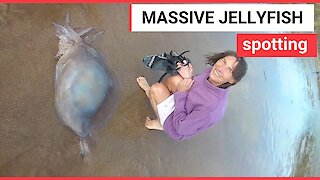 Beach-goers try to save a massive barrel jellyfish