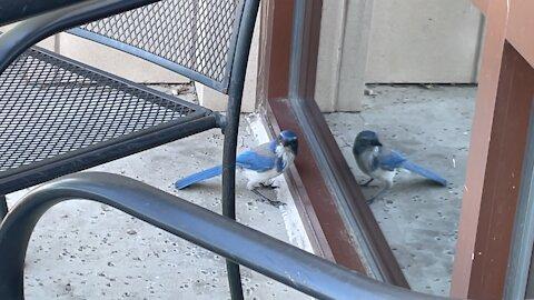 Bluebird attacks itself! Sound Familiar?