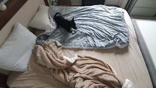 Dog with zoomies won't let owners make the bed
