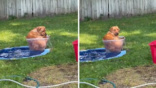 Big doggy hilariously squeezes into tiny tub