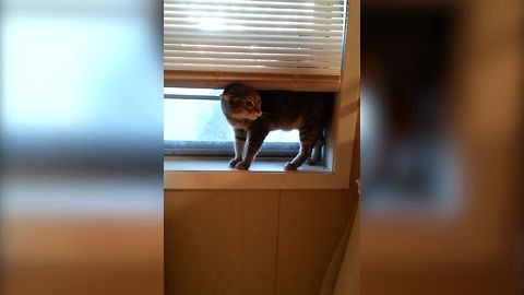 13 Cats Who Forgot How To Cat