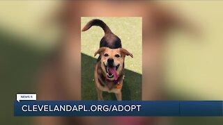 Cleveland APL Pet of the Weekend: Playful pooch named Nyla