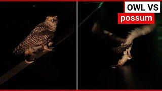 Injured owl flies off carrying a massive possum