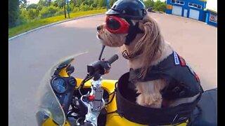 Qui a dit que les chiens ne sont pas aventuriers?