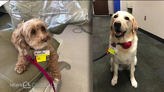 Researchers at Case Western Reserve University using saliva to see how humans benefit from therapy animals