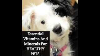 Essential Vitamins And Minerals For HEALTHY PETS!