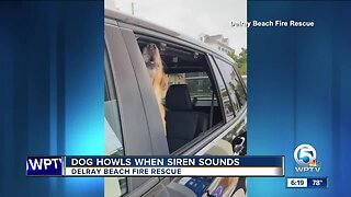 Dog howls at siren in Delray Beach