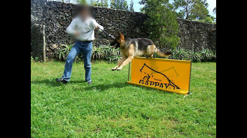 Paulo Rebelo - Treino Canino desde 2003