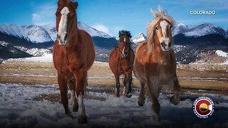 Majestic wild horses and sweeping mountain views: Our Colorado through your photos