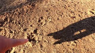 Lake Side Animal Tracks ~ What is this Track?