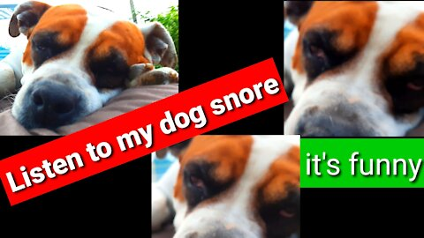 Listen to my dog snore it's funny