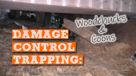 S2:E21 Damage Control Trapping Woodchucks & Coons | Kids Outdoors