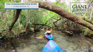 The Chassahowitzka River in Homosassa, FL | Giant Summer Adventure