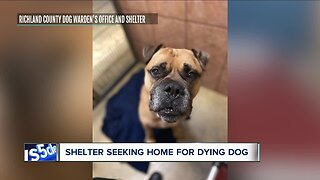 Dog with cancer looking to find loving home