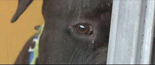Animal drop-offs skyrocket at the Las Vegas Animal Foundation