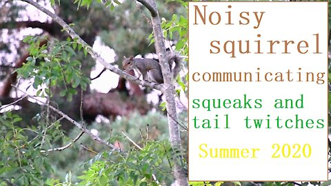 Did you know that squirrels make noises like this?