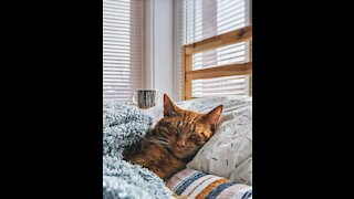 Funny adorable pets #