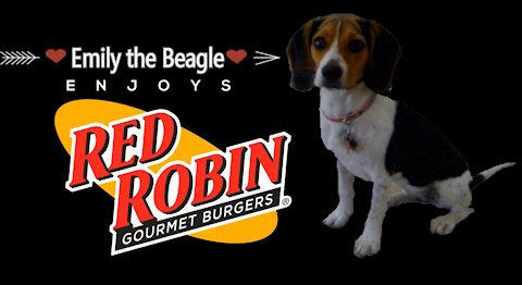 Red Robin Beagle