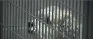 Animal Foundation takes in nearly 230 lost pets amid coronavirus policy changes