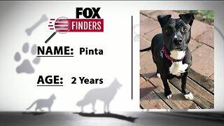 FOX Finders Pet Finder - Pinta