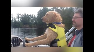 dogs are the best Dogs on boats