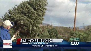 Treecycle in Tucson
