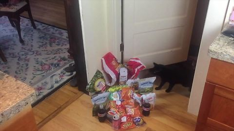 Jumping cat leaps over various snack items