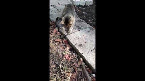 Kitten vs mouse