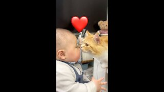 A cat trying to kiss a baby video