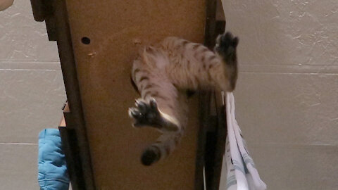 Kitten Dives Into Tiny Hole And Gets Stuck