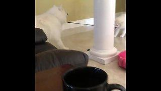 Puppy pulls dog on leash