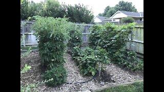 Kansas Gardening Tips Spring/Summer 2020