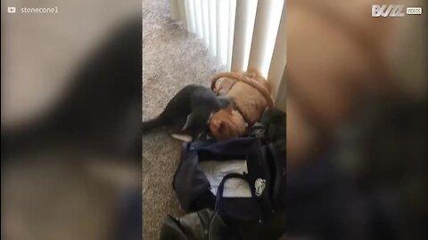Cadela põe fim a suposta batalha de gatos
