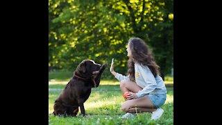 Training your best-friend : Dog