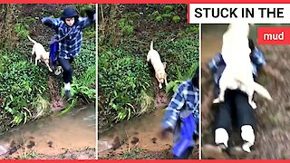 'Show-off' dog owner tries to leap across flooded path - falls in mud instead
