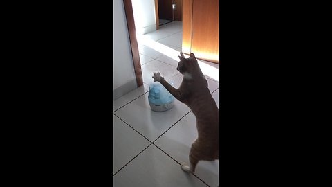 Cat adorably plays with steam from humidifier