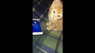 Cute little kitten plays video game for first time