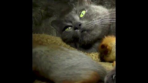 Esta gatita es madre adoptiva de ardillas bebés   Sabías que...