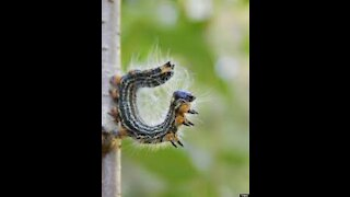 Larvae hug Caterpillar hug