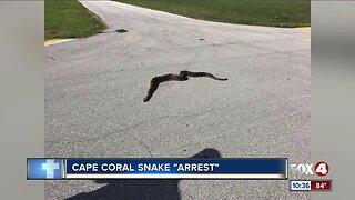 Police take large snake 'into custody' in Cape Coral